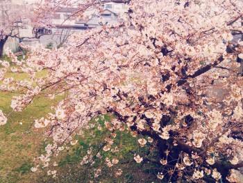 16-03-31-06-23-23-954_photo